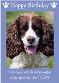 "English Springer Spaniel-Happy Birthday - ""From The Dog"" Theme"